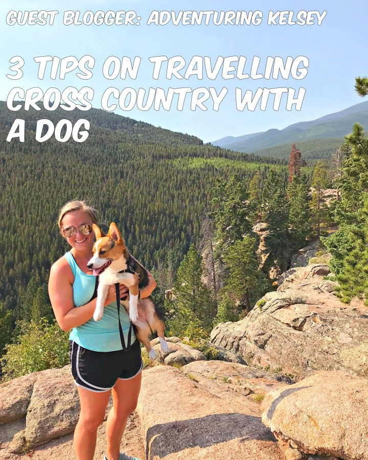 3 Tips on Travelling Cross Country with a Dog